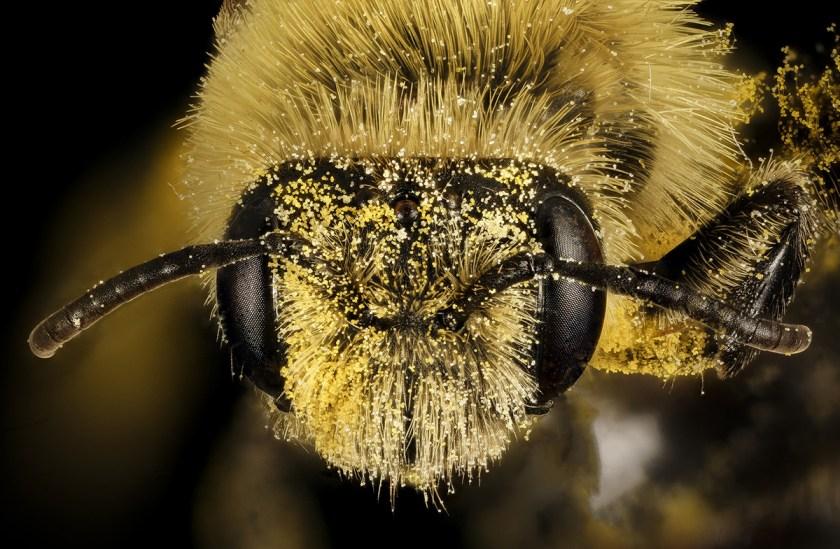 Bees – BLDGBLOG
