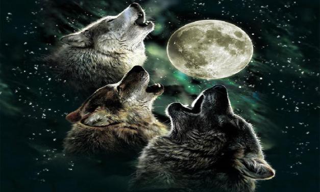 Kdo se bojí zlého vlka? Strašidelné zvíře v příbězích po celém světě