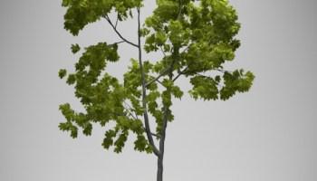 Tree creation with modular tree addon - BlenderNation