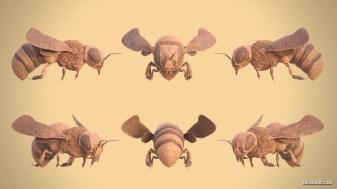 nicholas-davis-honeybeerender