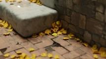 iwo-pilc-leaves-in-corner