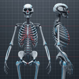 Anatomy_Bones_60