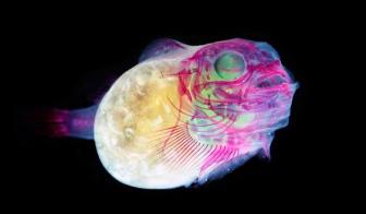Glow Fish (source)
