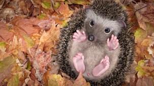 flojoART_Hedgehog