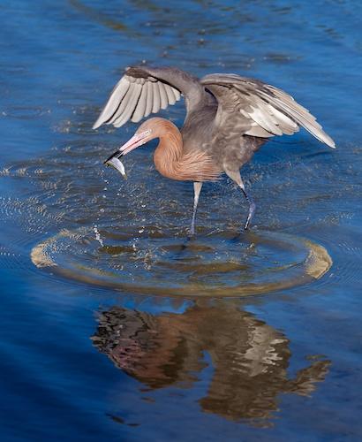 Bird Fish (by Scott Bourne)