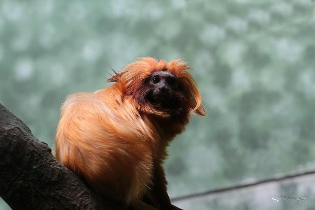 Äffchen (Foto aus dem Zoo Frankfurt)