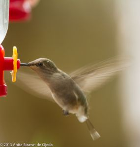 Some days, I feel like a hummingbird trying to keep my world together on one tail feather.