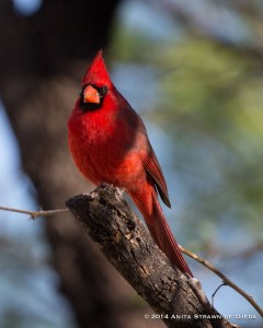 Who can be grumpy when gazing at this gorgeous bird?