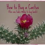 How to Hug a Cactus in 5 Simple Steps