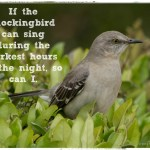 If Mockingbirds Sing in the Darkest Hours, So Can I