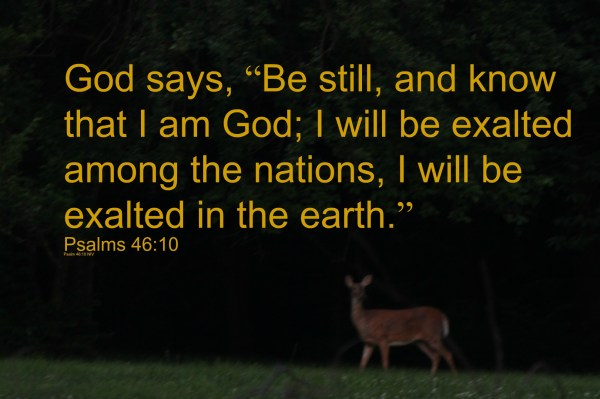 In the midst of life's mess - be still and let God be exalted!