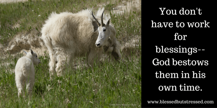 Glaciers Goals And Goats In Banff National Park Blessed But