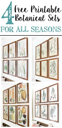 Four free printable sets of botanical art for all seasons of the year- spring, summer, winter, and fall - $3 each on color engineer prints or free from your own printer to frame as wall decor. #gallerywall #freeprintable #freeart