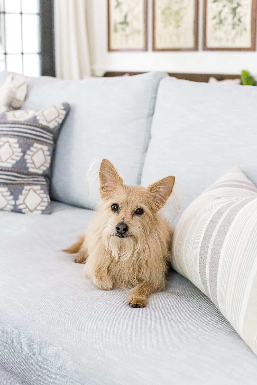How to keep an eye on your pets while you're away via smart home
