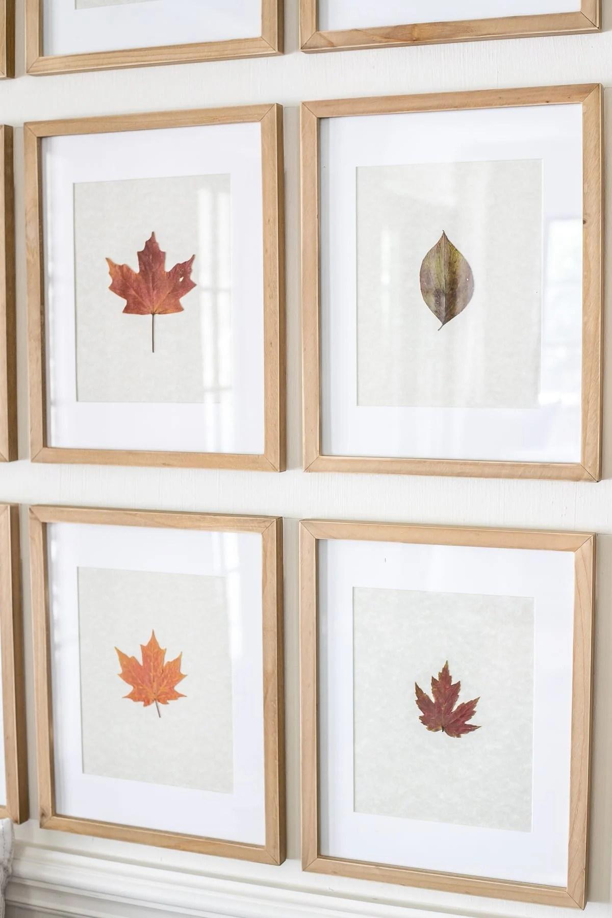 framed pressed fall leaves