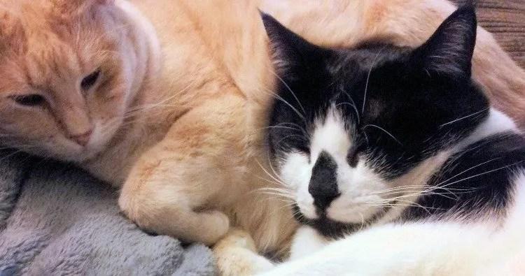 Meet My New Adopted Kitties