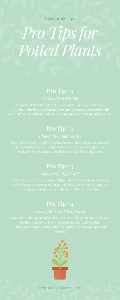Pro Tips for Potted Plants Infographic