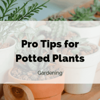 Pro Tips for Potted Plants — Blessings By Me