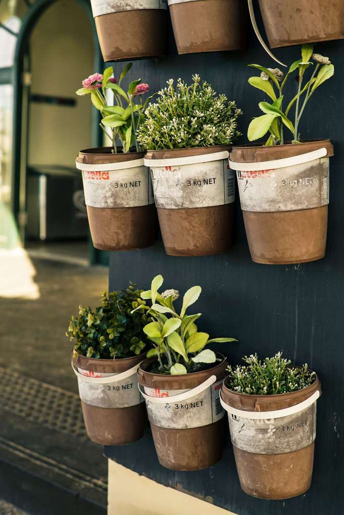 planting and growing herbs - container gardening