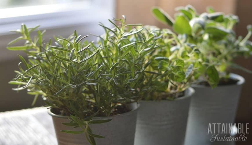 Windowsill Herb Gardening