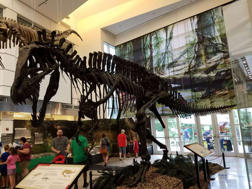 T-Rex Skeleton - Museum of Natural History