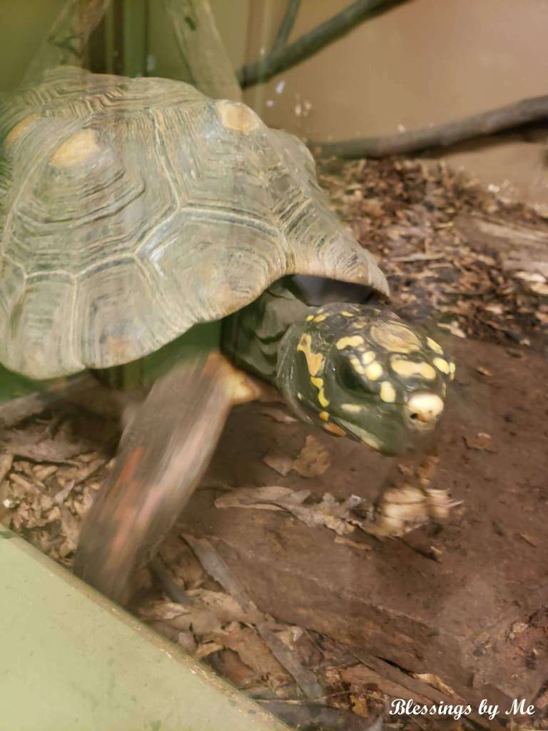 A turtle at the zoo