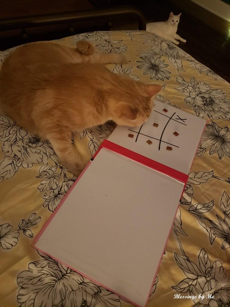 Tic-tac-toe cat
