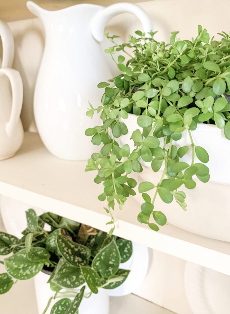 isabella houseplant in white bowl