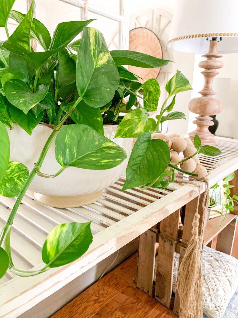 plant in cream ceramic bowl