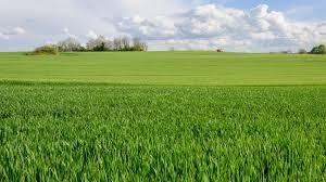 le foncier accaparé par des sociétés au détriment des petites fermes