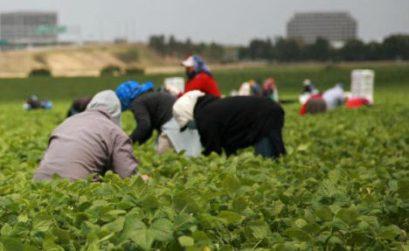 Migrations et agriculture en Méditerranée