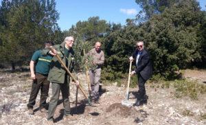 Plantation d'un olivier au Traou dou Gari