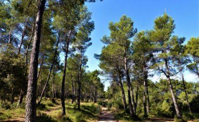 sortie forêt et apiculture