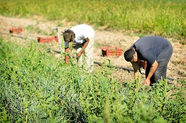 les jardiniers de Semailles