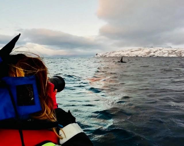 Ambre en Antarctique
