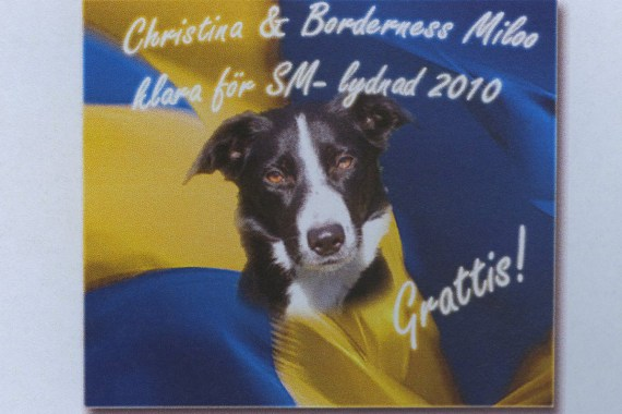 En  av de fejkade bilderna. Hunden Photoshopad in på Tammys flaggbild
