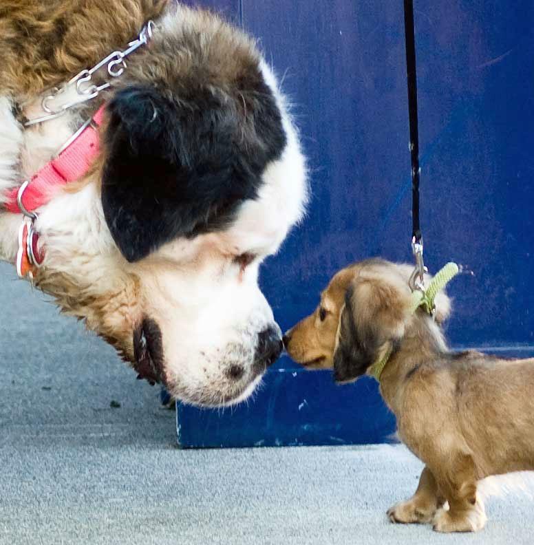 Bibliothek Sundern: Auf den Hund gekommen
