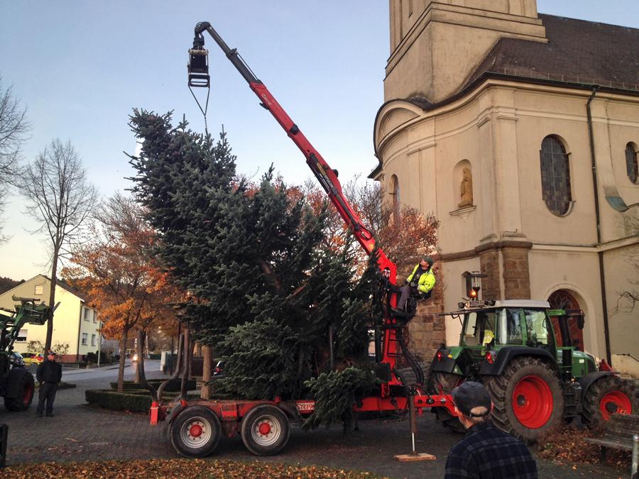 Aufstellen des Weihnachtsbaums in Bruchhausen. (Foto: CDU)