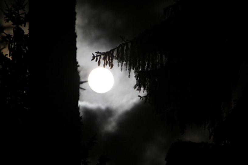 Mondschein-Nacht im Wildwald