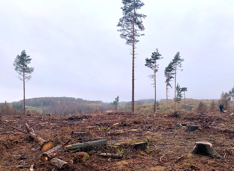 Katastrophaler Zustand des Arnsberger Stadtwalds