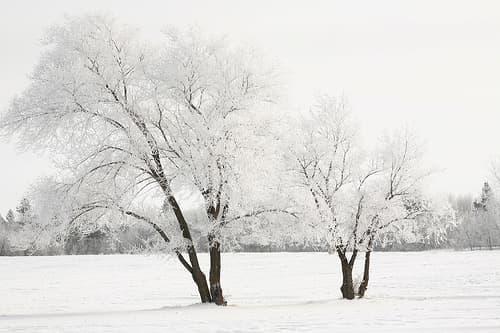 white winter wonderland