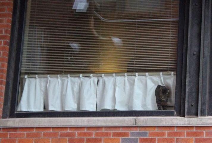 cat curtain