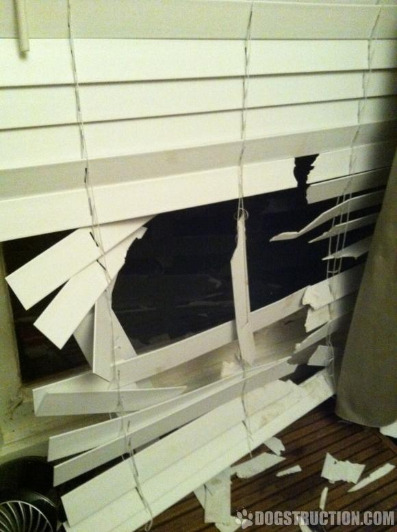dog proof blinds duck dog destroys blinds how to keep dogs from destroying blinds the finishing touch