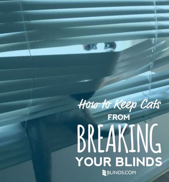 How to keep cats from breaking your blinds