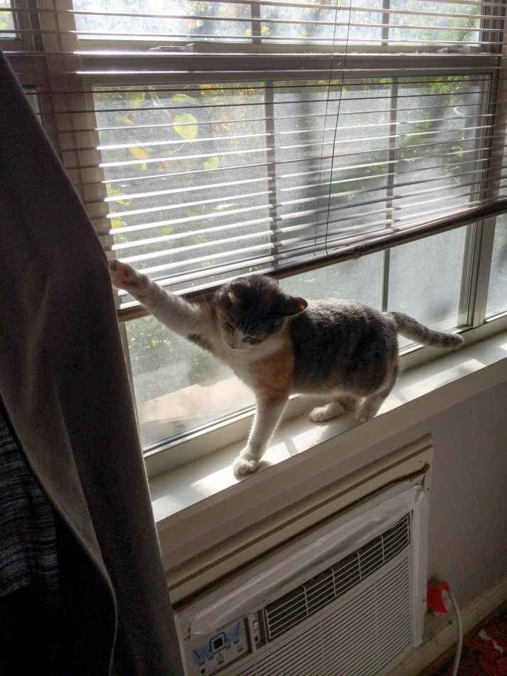 How To Keep Cats From Breaking Blinds The Blinds Com Blog