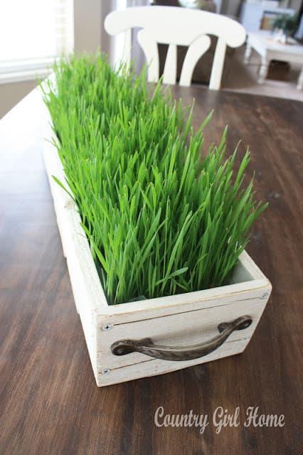Wheatgrass Spring decor