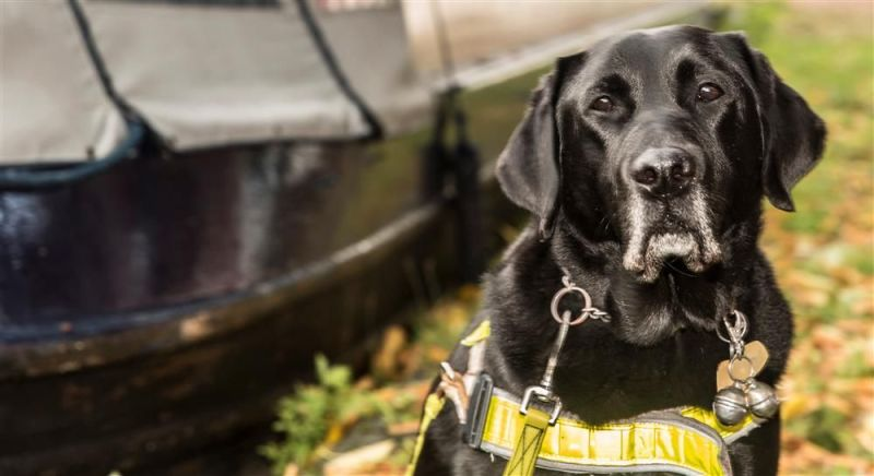 Guide Dog Oakley - Star of our Name a Puppy fund raising campaign.
