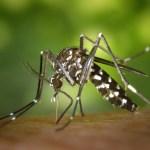 Naturalne i skuteczne metody odstraszania komarów.