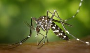 Coś na komary dla dzieci? Naturalne i skuteczne metody odstraszania owadów.