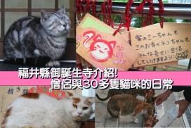福井縣「御誕生寺」介紹 僧侶與30多隻貓咪的日常 ♪